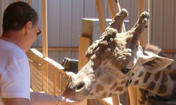 Feeding Neverland Ranch animals